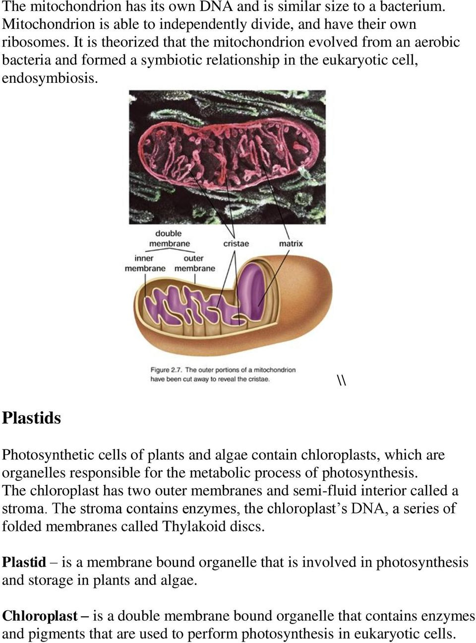 Plastids Photosynthetic cells of plants and algae contain chloroplasts, which are organelles responsible for the metabolic process of photosynthesis.