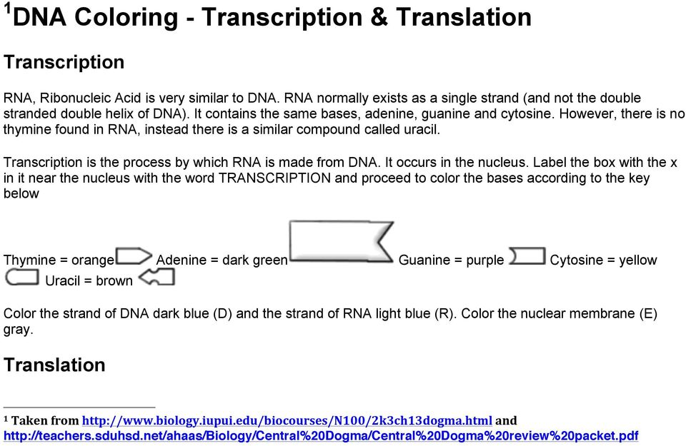 Transcription is the process by which RNA is made from DNA. It occurs in the nucleus.