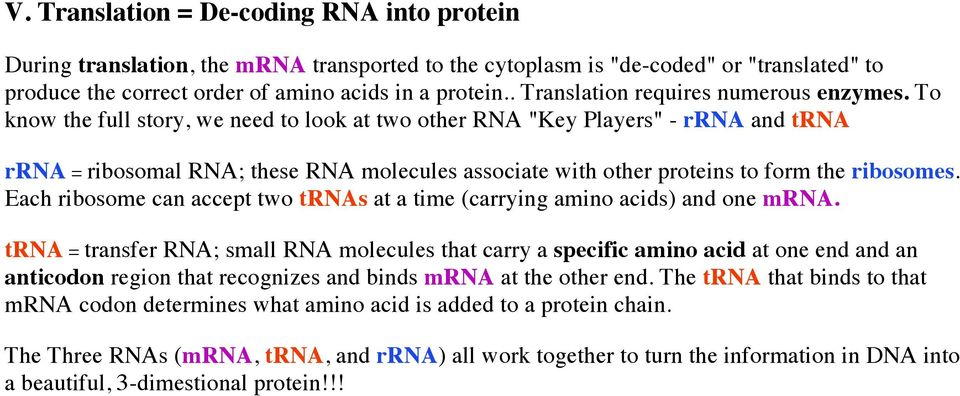"To know the full story, we need to look at two other RNA ""Key Players"" - rrna and trna rrna = ribosomal RNA; these RNA molecules associate with other proteins to form the ribosomes."