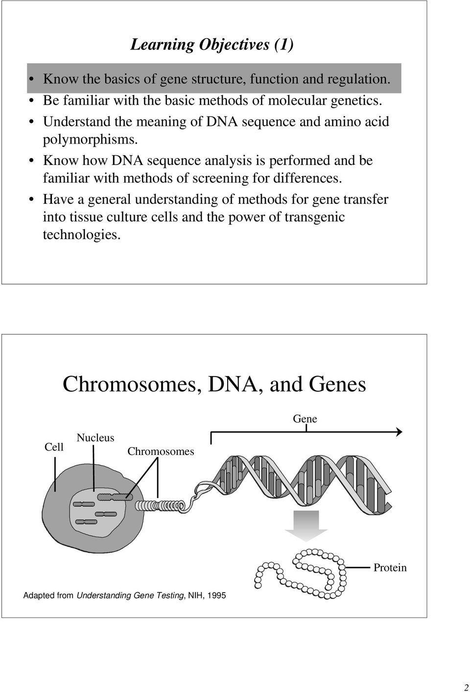 Know how DNA sequence analysis is performed and be familiar with methods of screening for differences.