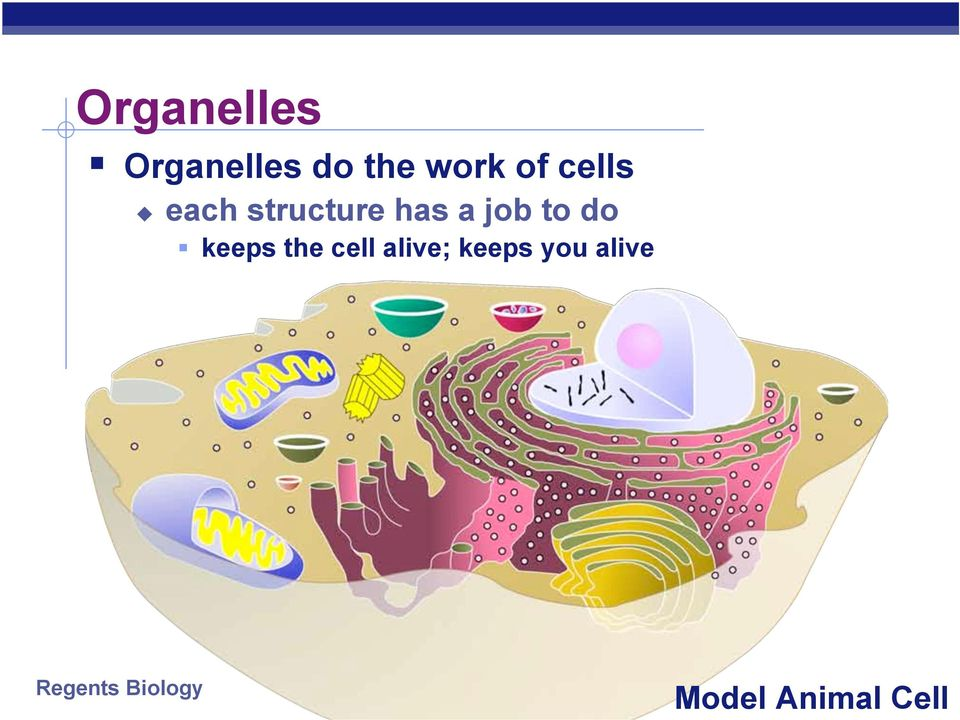 a job to do keeps the cell