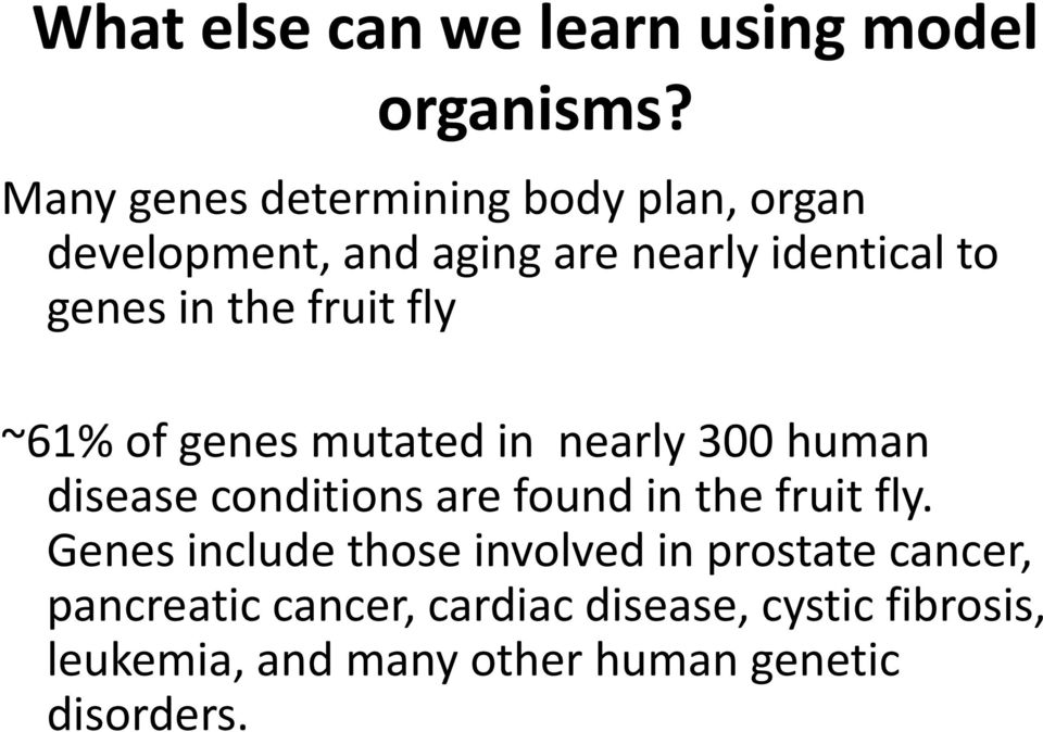 the fruit fly ~61% of genes mutated in nearly 300 human disease conditions are found in the fruit