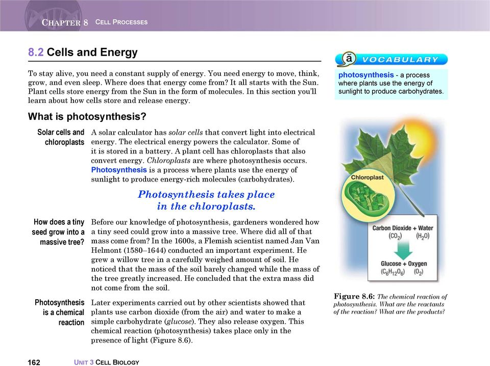Solar cells and chloroplasts How does a tiny seed grow into a massive tree? Photosynthesis is a chemical reaction A solar calculator has solar cells that convert light into electrical energy.