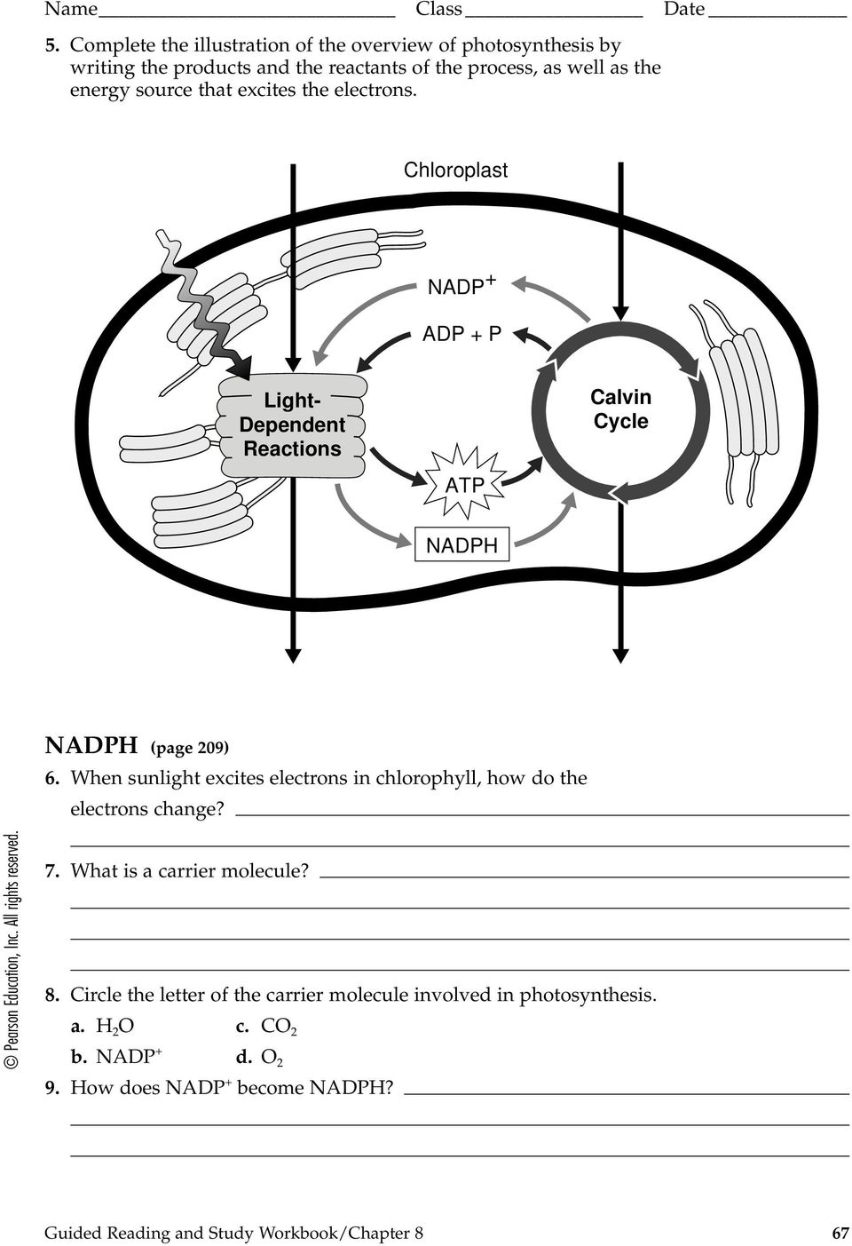 Overview of Photosynthesis   BIO 101 General Biology I moreover Photosynthesis Review Worksheet furthermore Photosynthesis   Cellular Respiration Worksheet also AP BIOLOGY EXAM REVIEW GUIDE likewise Photosynthesis And Cellular Respiration Worksheet Google   salle de in addition Photosynthesis Worksheets   Free Printables   Education besides  further Photosynthesis Review Worksheet moreover Photosynthesis Review Worksheet as well ADD YOUR PAGE LE likewise  as well Photosynthesis P P P  Autotrophs and Heterotrophs  page 201 as well Photosynthesis Revision Lesson by sea   Teaching Resources   Tes together with Photosynthesis  video    Khan Academy furthermore Photosynthesis Review Teaching Resources   Teachers Pay Teachers moreover Photosynthesis Worksheets   Free Printables   Education. on overview of photosynthesis review worksheet
