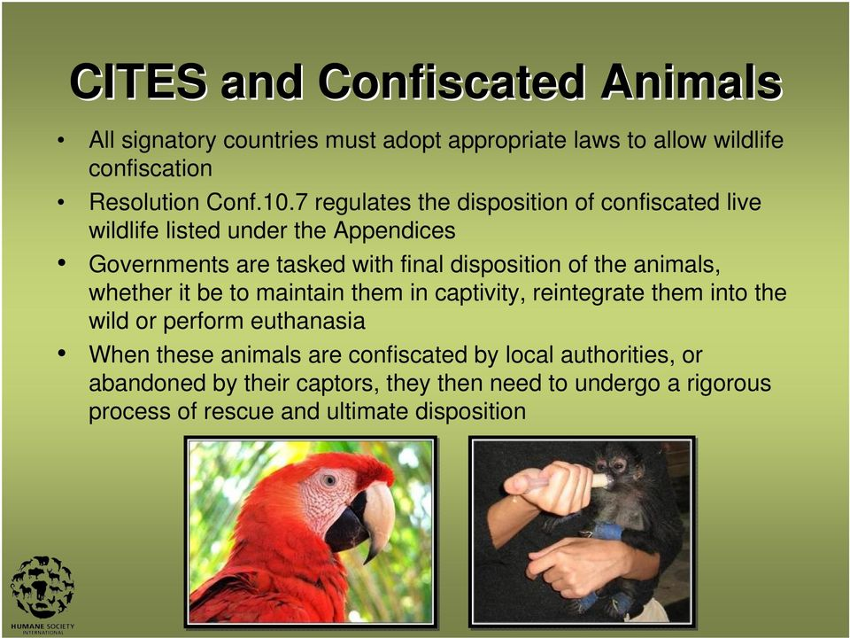 the animals, whether it be to maintain them in captivity, reintegrate them into the wild or perform euthanasia When these animals are