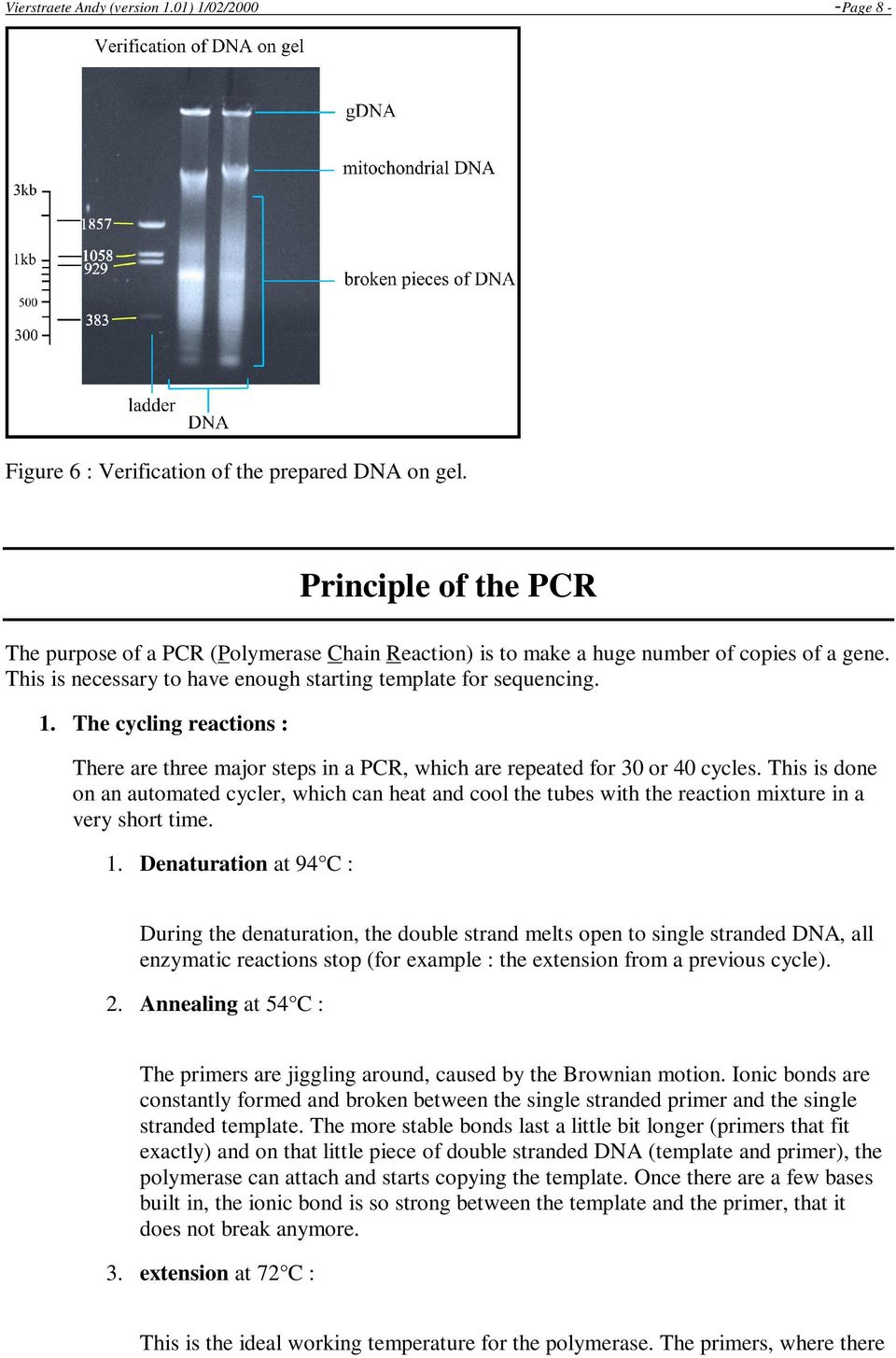 The cycling reactions : There are three major steps in a PCR, which are repeated for 30 or 40 cycles.