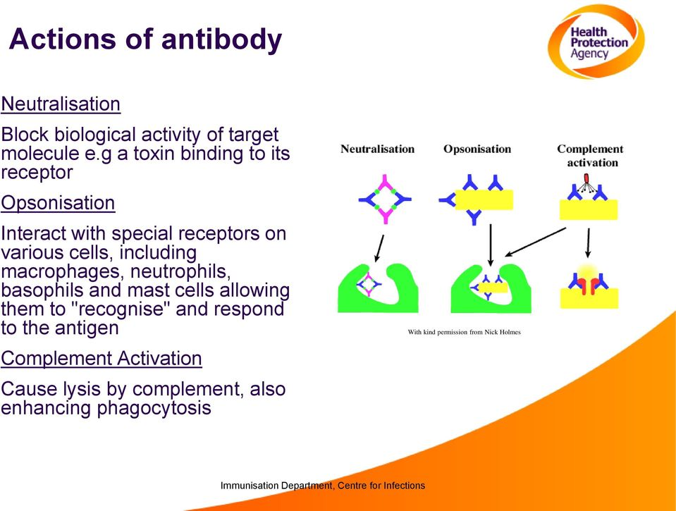"including macrophages, neutrophils, basophils and mast cells allowing them to ""recognise"" and respond"