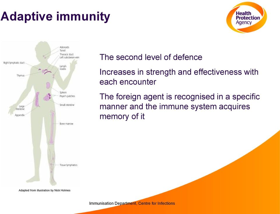 agent is recognised in a specific manner and the immune