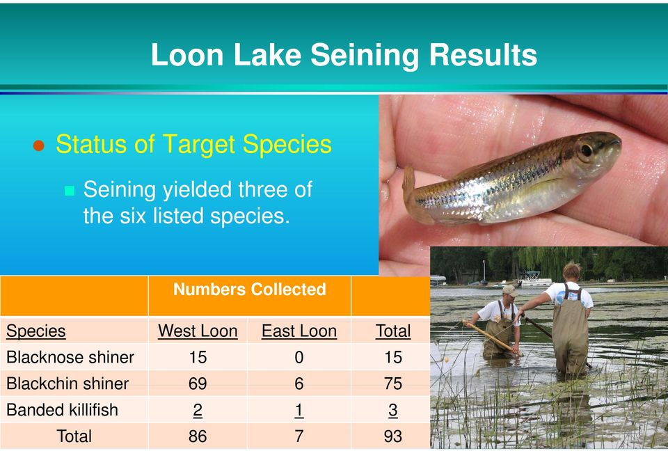 Numbers Collected Species West Loon East Loon Total