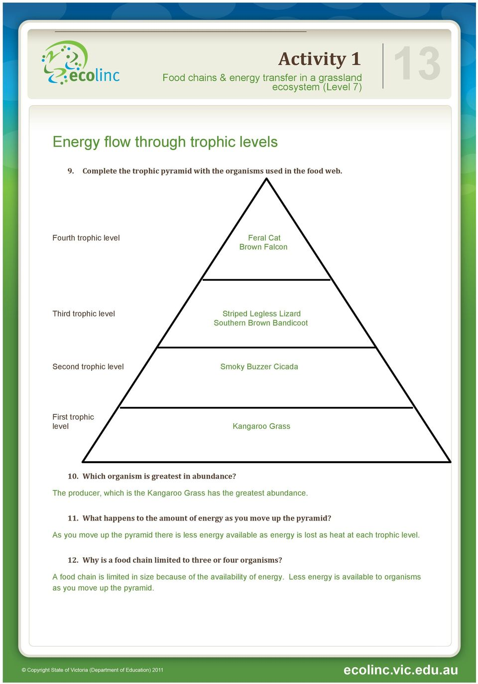 Which organism is greatest in abundance? The producer, which is the Kangaroo Grass has the greatest abundance. 11. What happens to the amount of energy as you move up the pyramid?