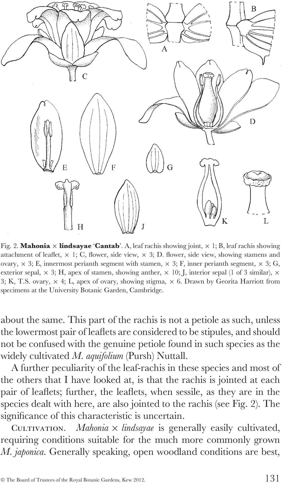 sepal (1 of 3 similar), 3; K, T.S. ovary, 4; L, apex of ovary, showing stigma, 6. Drawn by Georita Harriott from specimens at the University Botanic Garden, Cambridge. about the same.