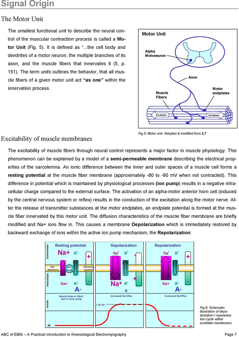The Abc Of Emg A Practical Introduction To Kinesiological Figure 5 Schematic Diagram Electromyography Detecting Term Units Outlines Behavior That All Muscle Fibers Given Motor Unit
