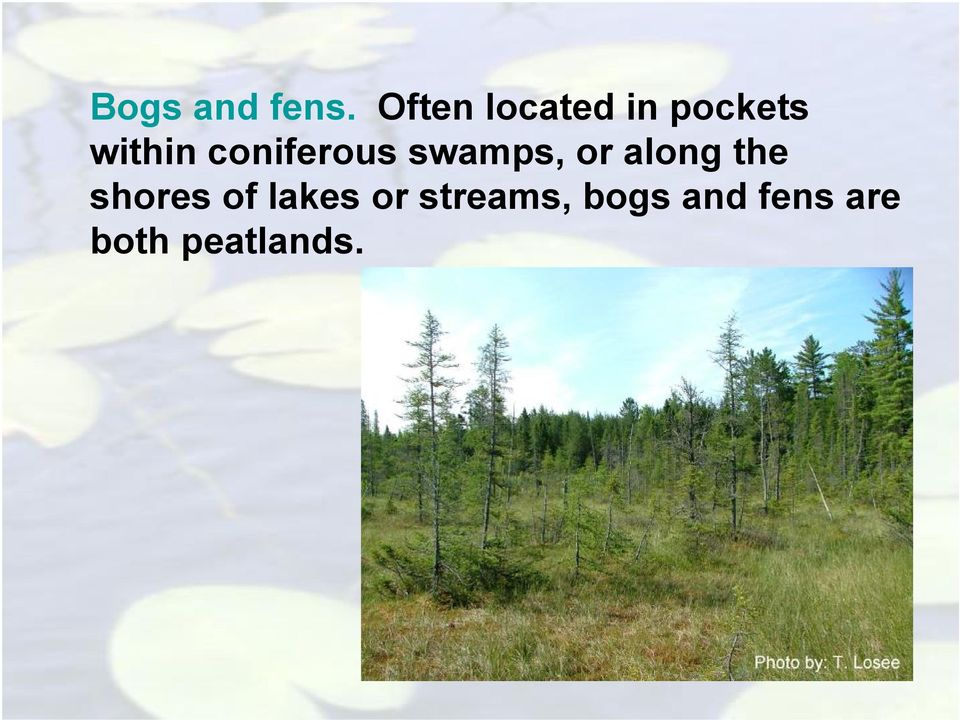 coniferous swamps, or along the