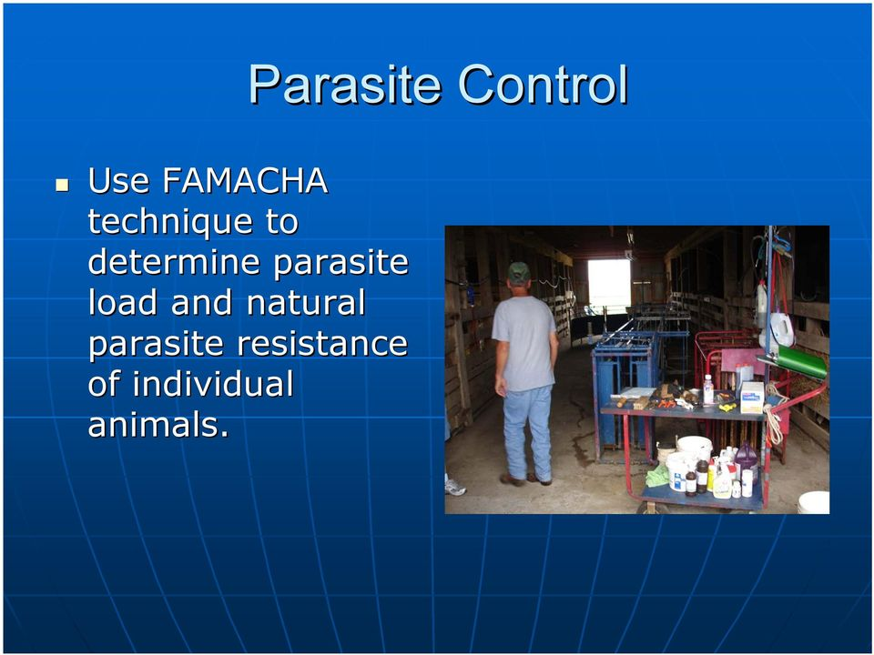 parasite load and natural