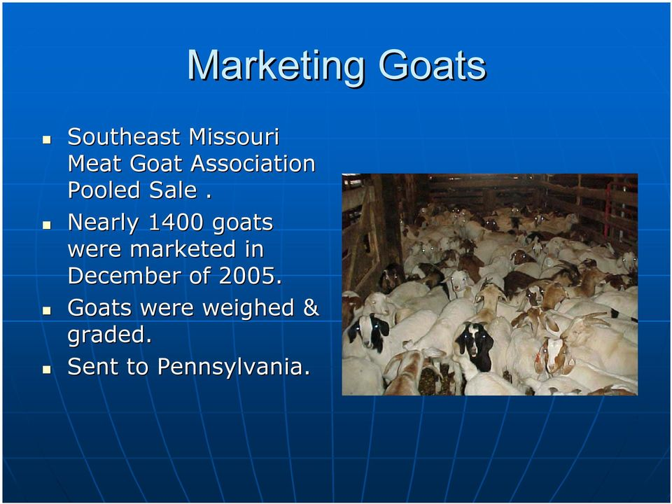 Nearly 1400 goats were marketed in December