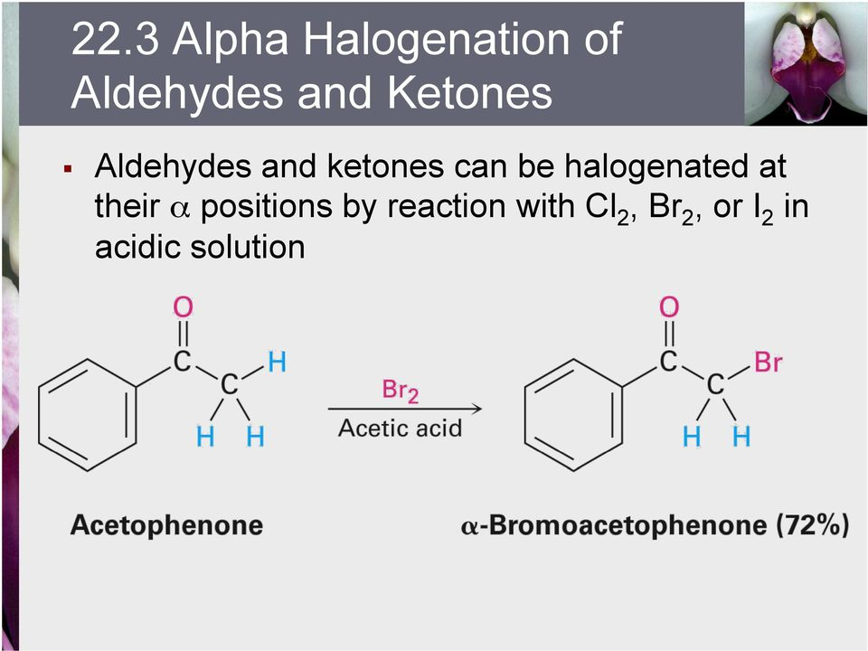 halogenated at their α positions by