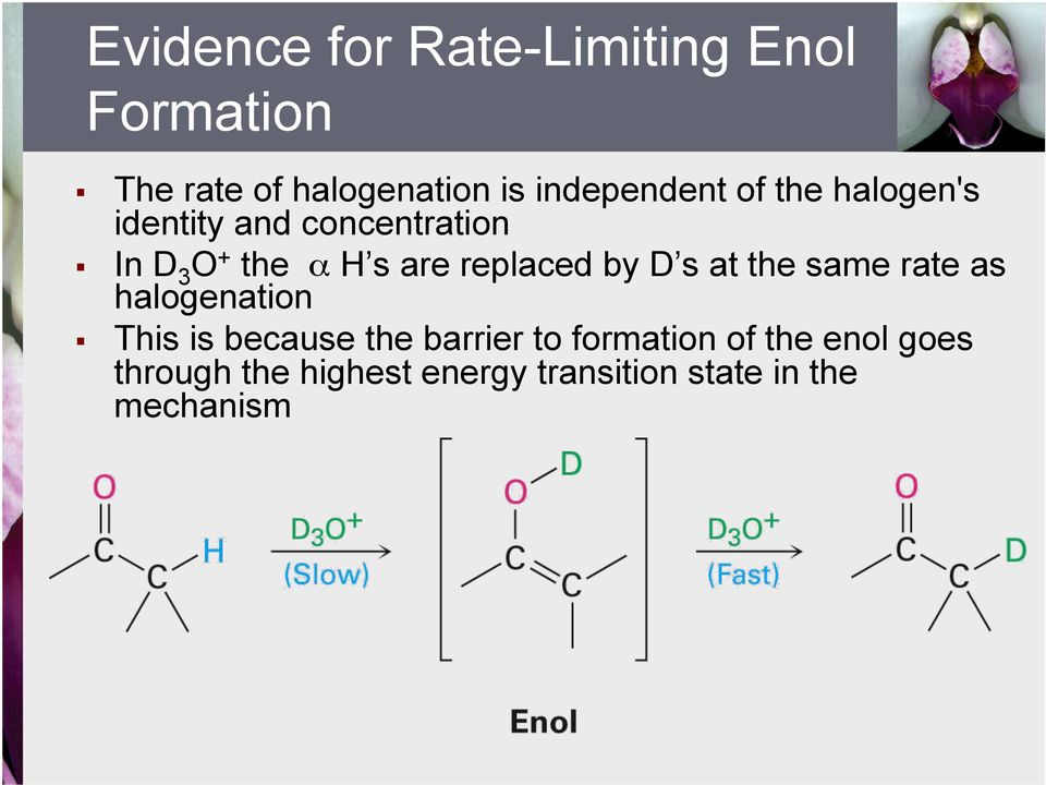 are replaced by D s at the same rate as halogenation This is because the