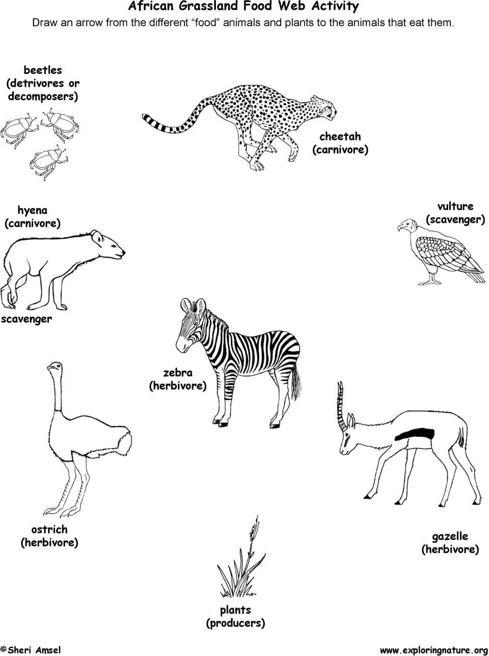 beetles (detrivores or decomposers) cheetah (carnivore) hyena (carnivore)