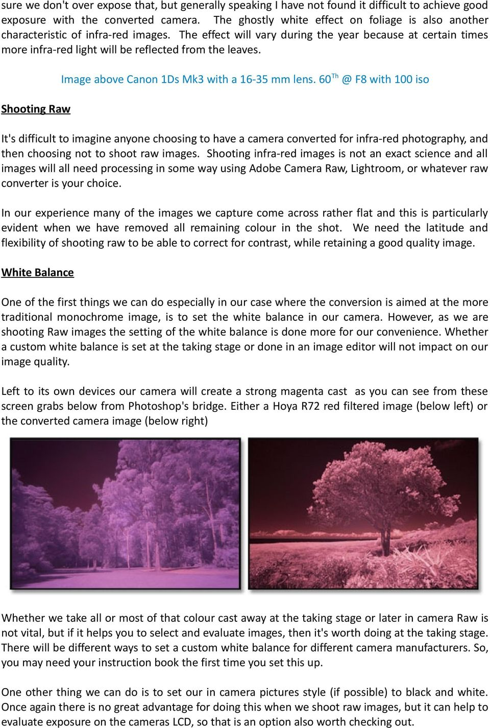 The effect will vary during the year because at certain times more infra-red light will be reflected from the leaves. Image above Canon 1Ds Mk3 with a 16-35 mm lens.