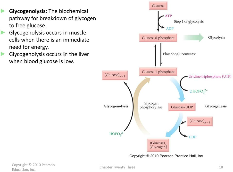Glycogenolysis occurs in muscle cells when there is an
