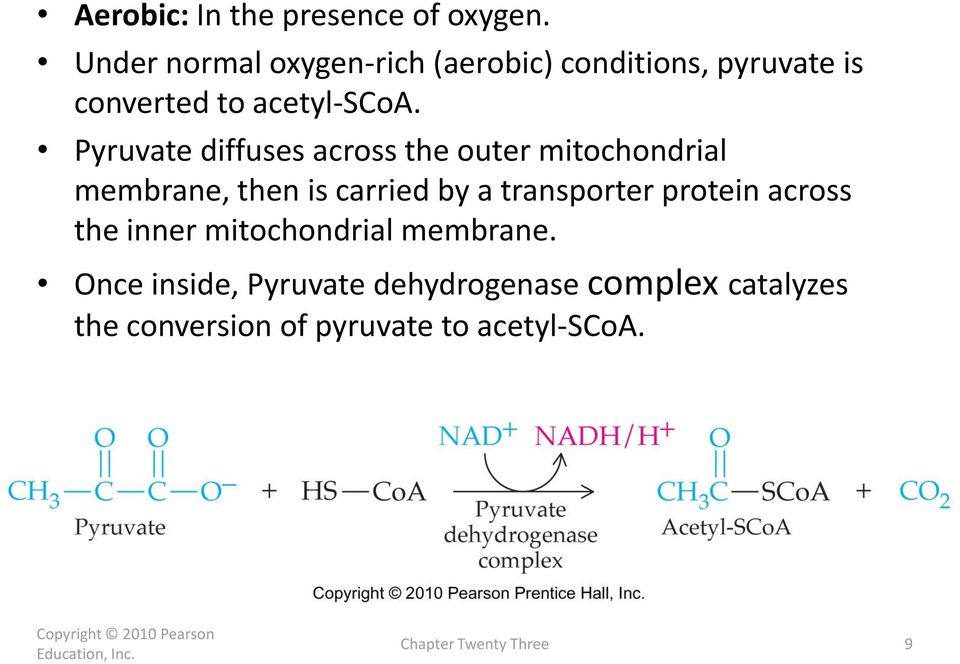 Pyruvate diffuses across the outer mitochondrial membrane, then is carried by a transporter