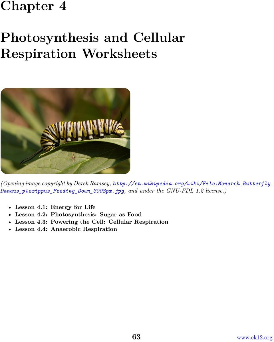 photosynthesis and respiration worksheet info essay on photosynthesis pdf topicsap questions biology junction words