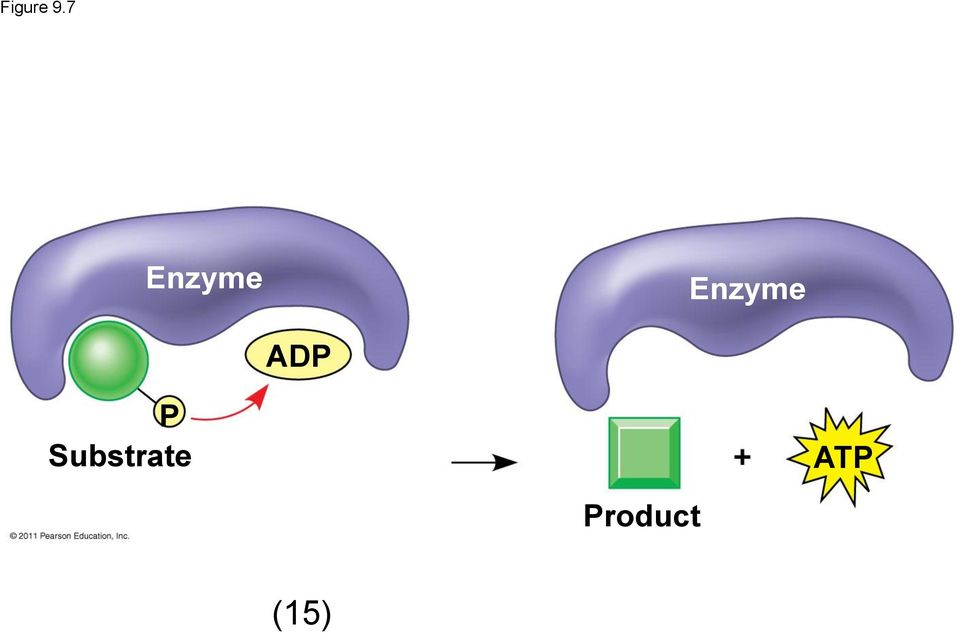 Enzyme ADP P