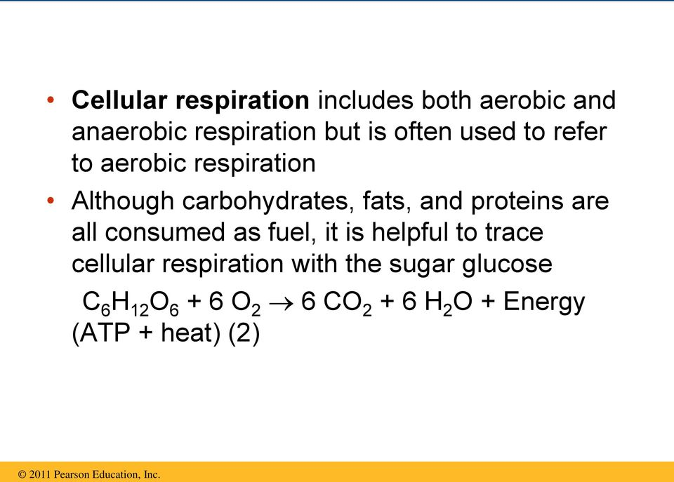 proteins are all consumed as fuel, it is helpful to trace cellular respiration