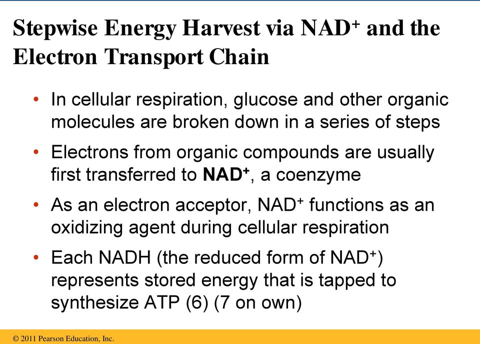 transferred to NAD +, a coenzyme As an electron acceptor, NAD + functions as an oxidizing agent during cellular