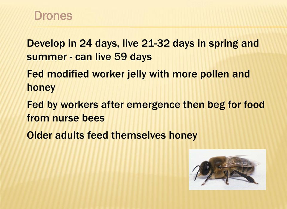 more pollen and honey Fed by workers after emergence then
