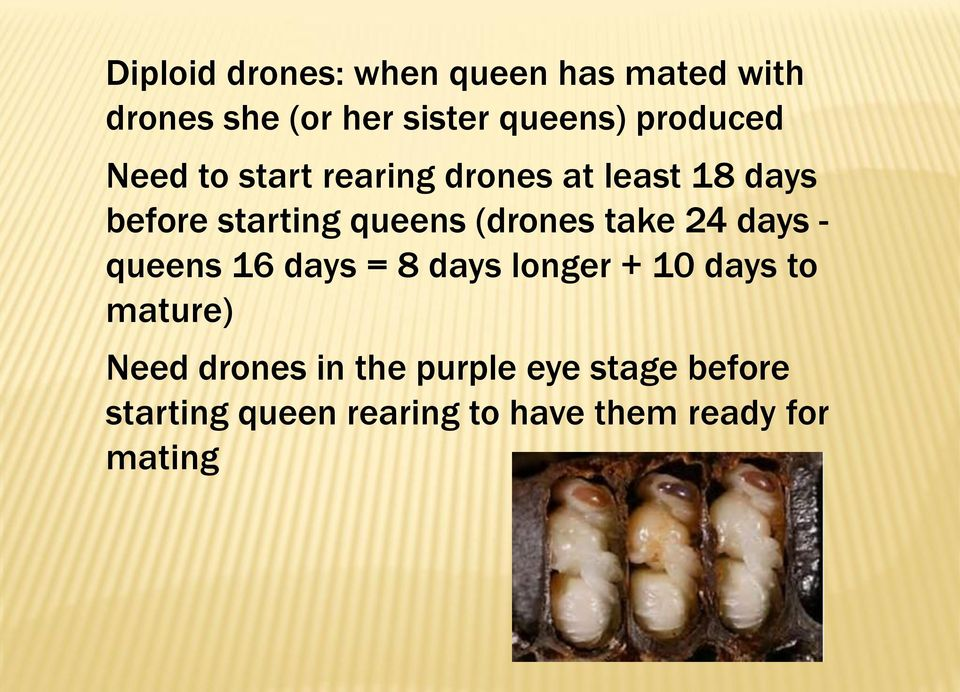 (drones take 24 days - queens 16 days = 8 days longer + 10 days to mature) Need