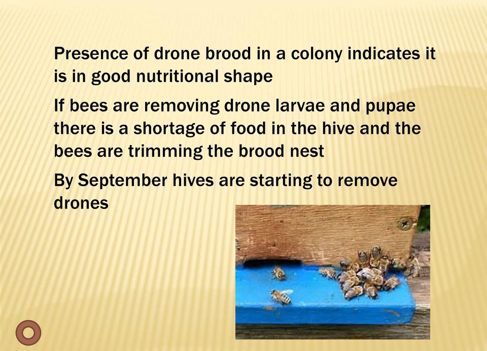 there is a shortage of food in the hive and the bees are