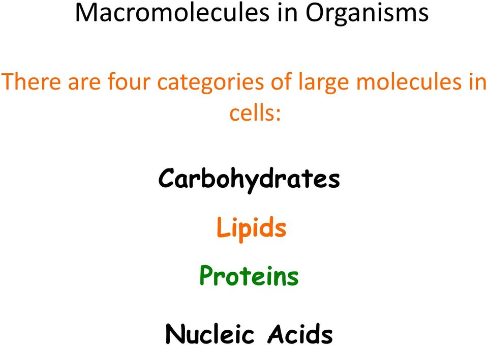 large molecules in cells: