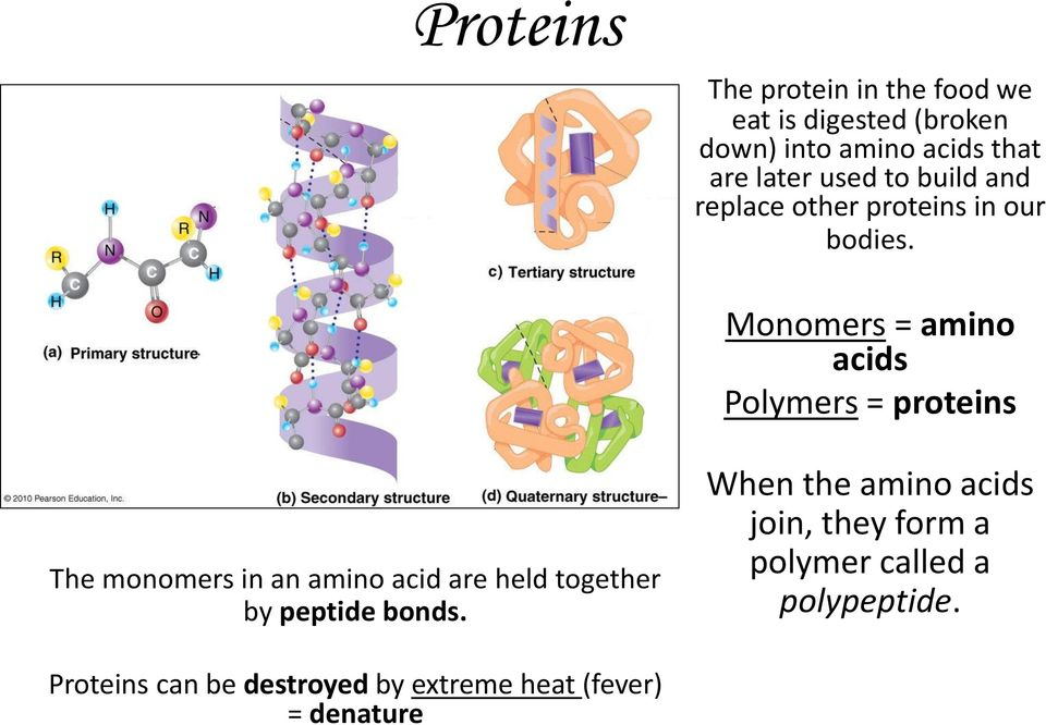 Monomers = amino acids Polymers = proteins The monomers in an amino acid are held together by