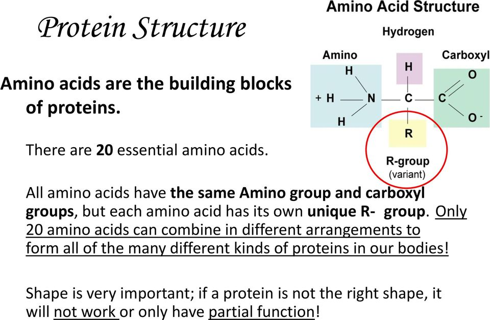 Only 20 amino acids can combine in different arrangements to form all of the many different kinds of proteins in