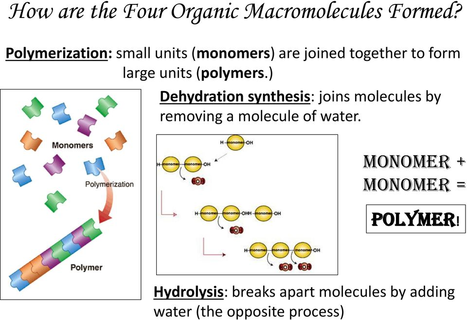 units (polymers.