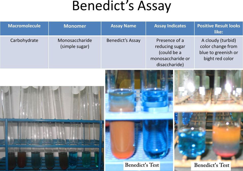 Assay Presence of a reducing sugar (could be a monosaccharide or