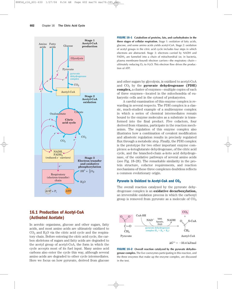 tage 3 Electron transfer and oxidative phosphorylation 2 + + 2 2 e 1 2 FIGURE 16 1 atabolism of proteins, fats, and carbohydrates in the three stages of cellular respiration.