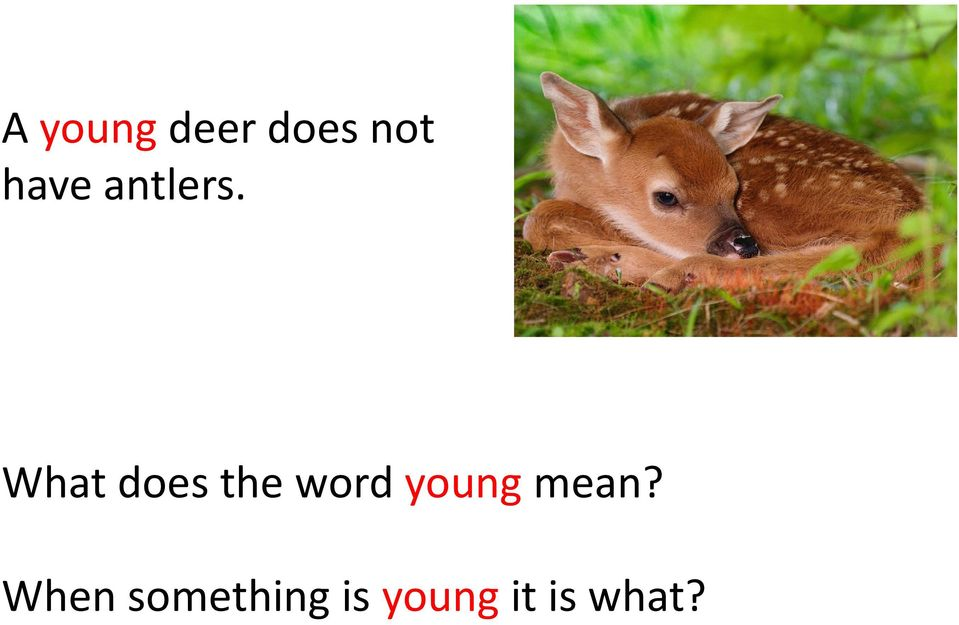 What does the word young