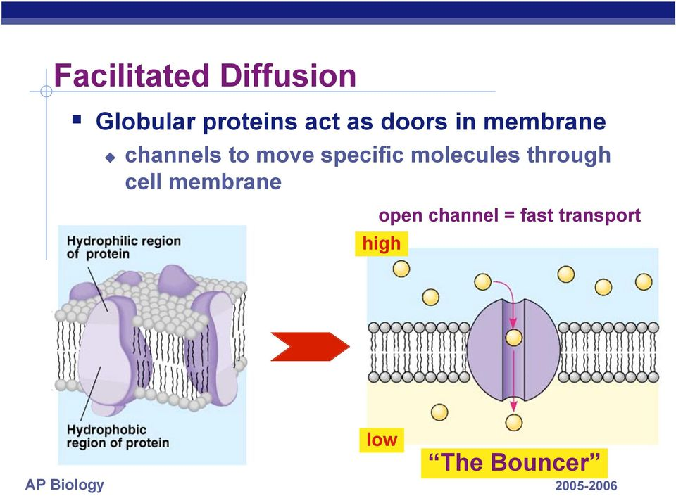 specific molecules through cell membrane