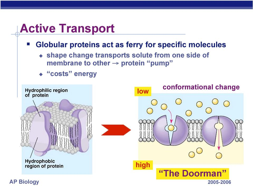 from one side of membrane to other protein pump