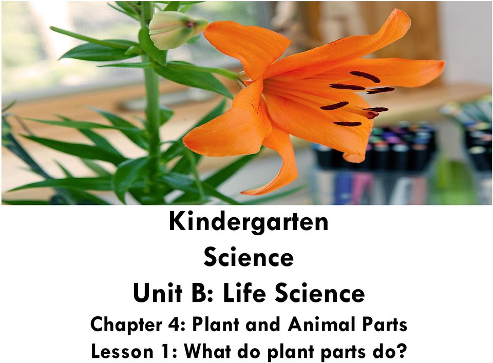 B: Life Science Chapter 4: Plant and