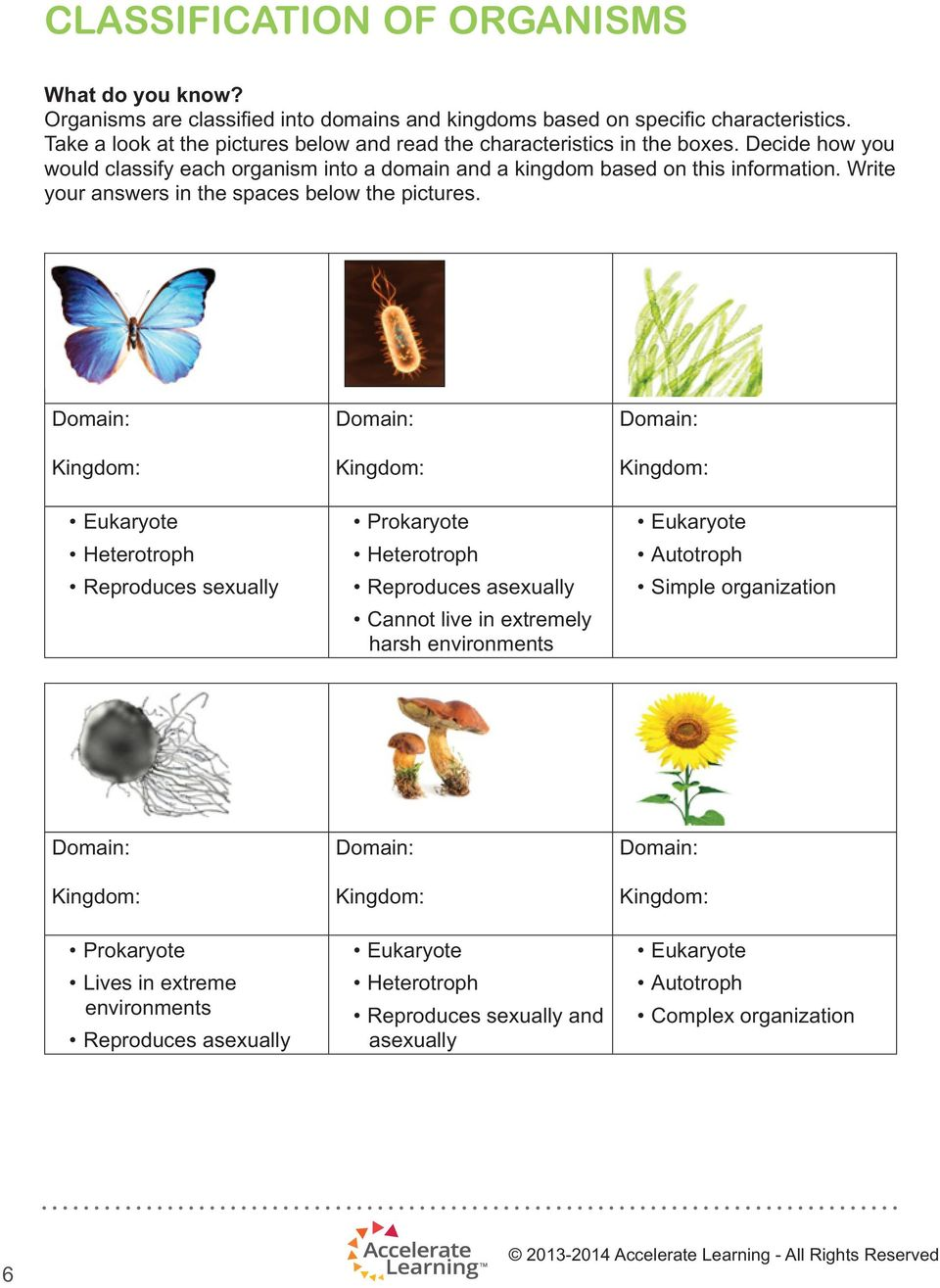 Decide how you would classify each organism into a domain and a kingdom based on this information. Write your answers in the spaces below the pictures.
