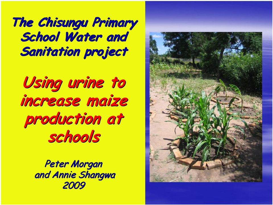 to increase maize production at