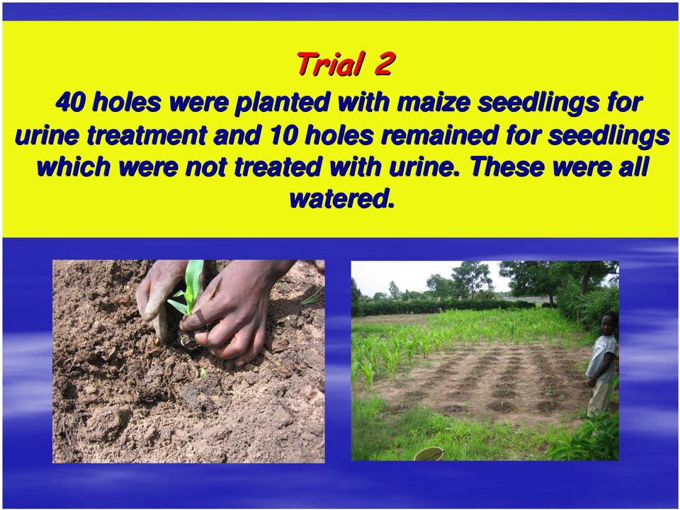 holes remained for seedlings which were