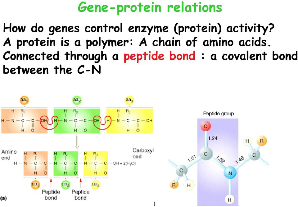 A protein is a polymer: A chain of amino acids.
