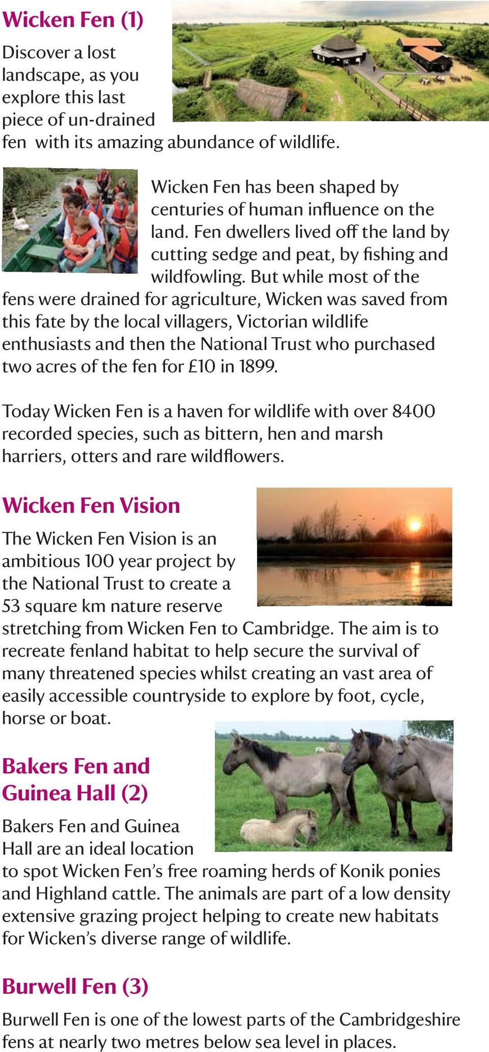 But while most of the fens were drained for agriculture, Wicken was saved from this fate by the local villagers, Victorian wildlife enthusiasts and then the National Trust who purchased two acres of