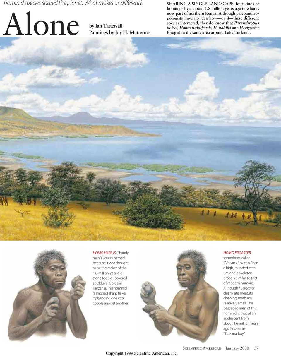 Although paleoanthropologists have no idea how or if these different species interacted, they do know that Paranthropus boisei, Homo rudolfensis, H. habilis and H.