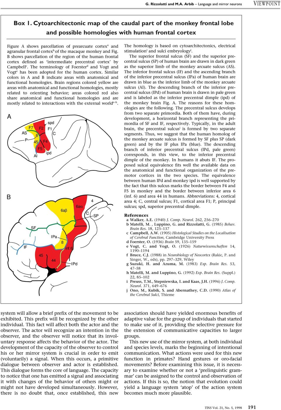 of the macaque monkey and Fig. B shows parcellation of the region of the human frontal cortex defined as intermediate precentral cortex by Campbell c.