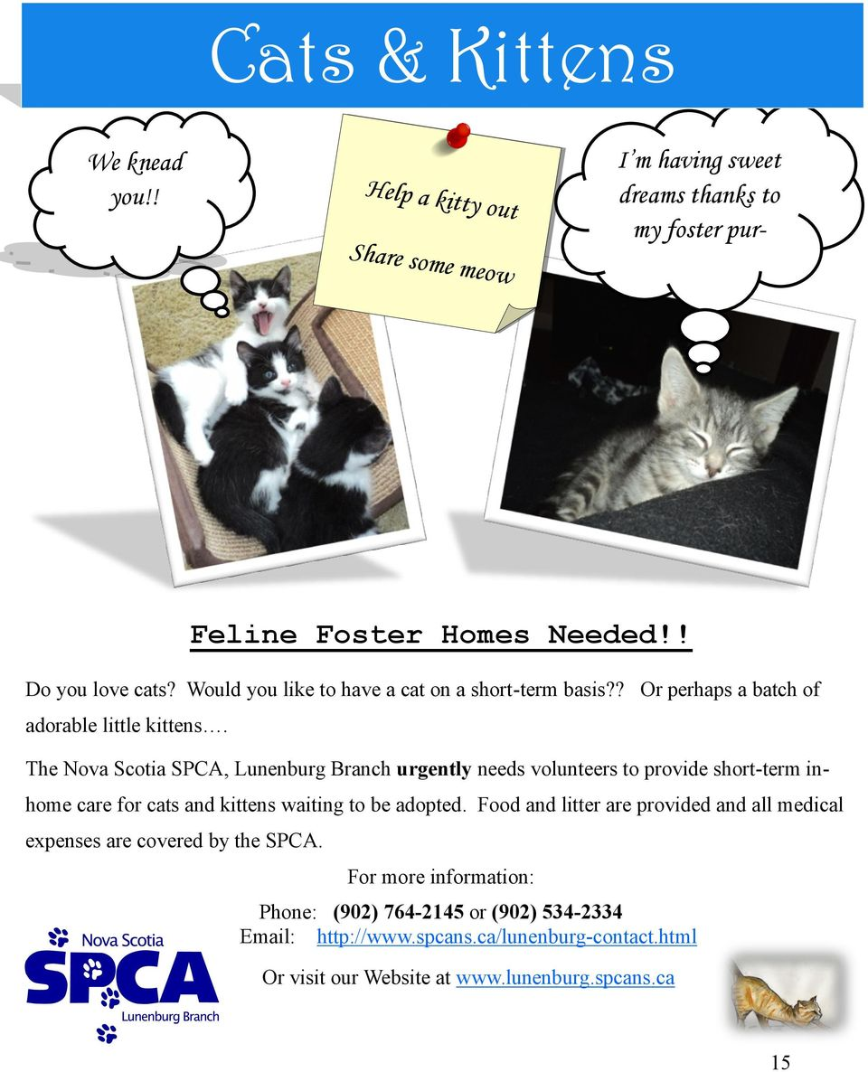 The Nova Scotia SPCA, Lunenburg Branch urgently needs volunteers to provide short-term inhome care for cats and kittens waiting to be adopted.